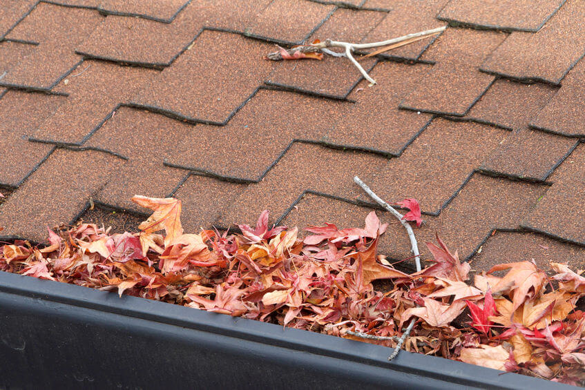 How to Protect Your Roof During the Fall Season