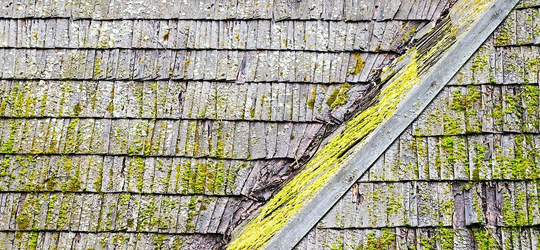 What To Do About Mold Growing On The Roof
